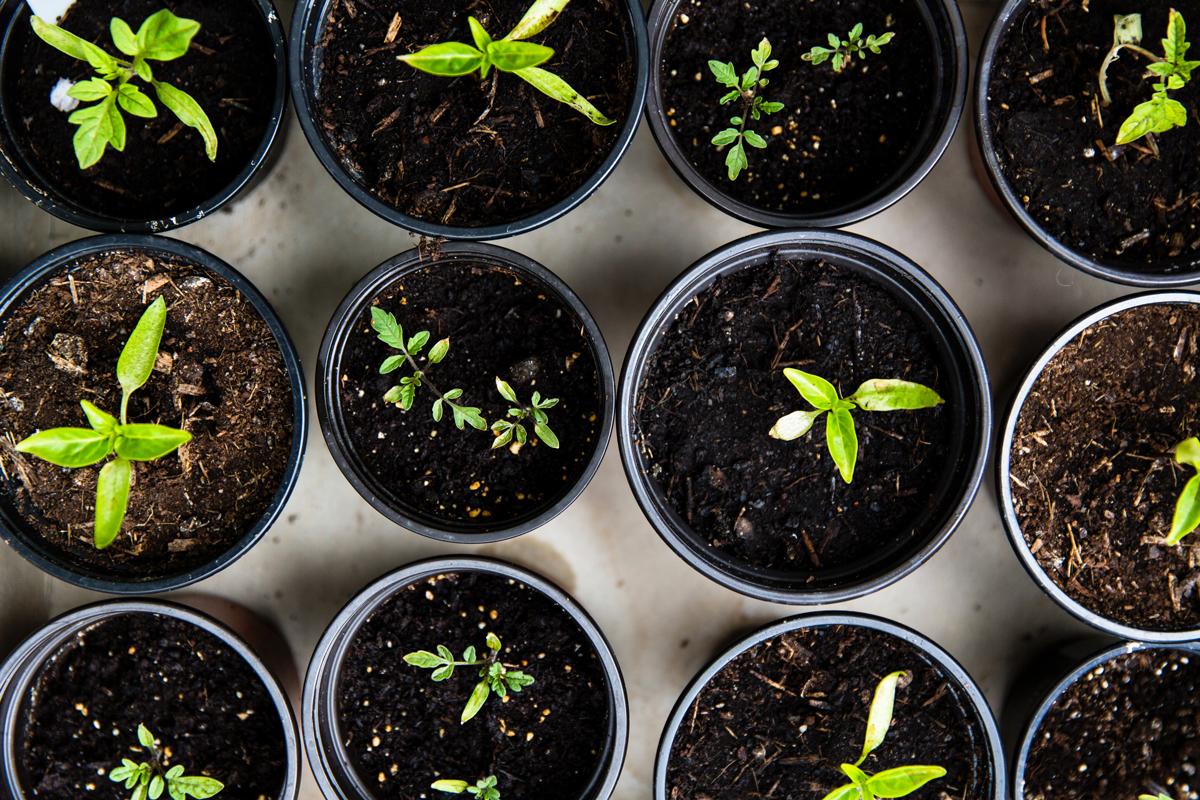 15 easy things to grow and why