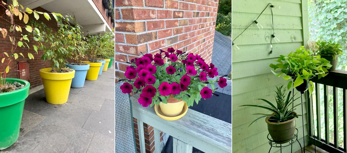 outdoor flowers to show which are the best pots for plants