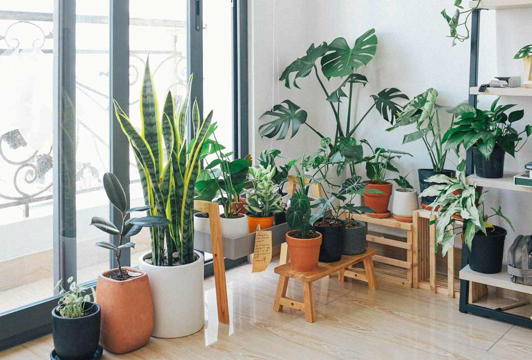 the best indoors house plants in front of a window