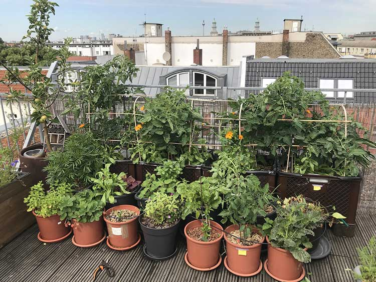 a rooftop garden with different plant variety